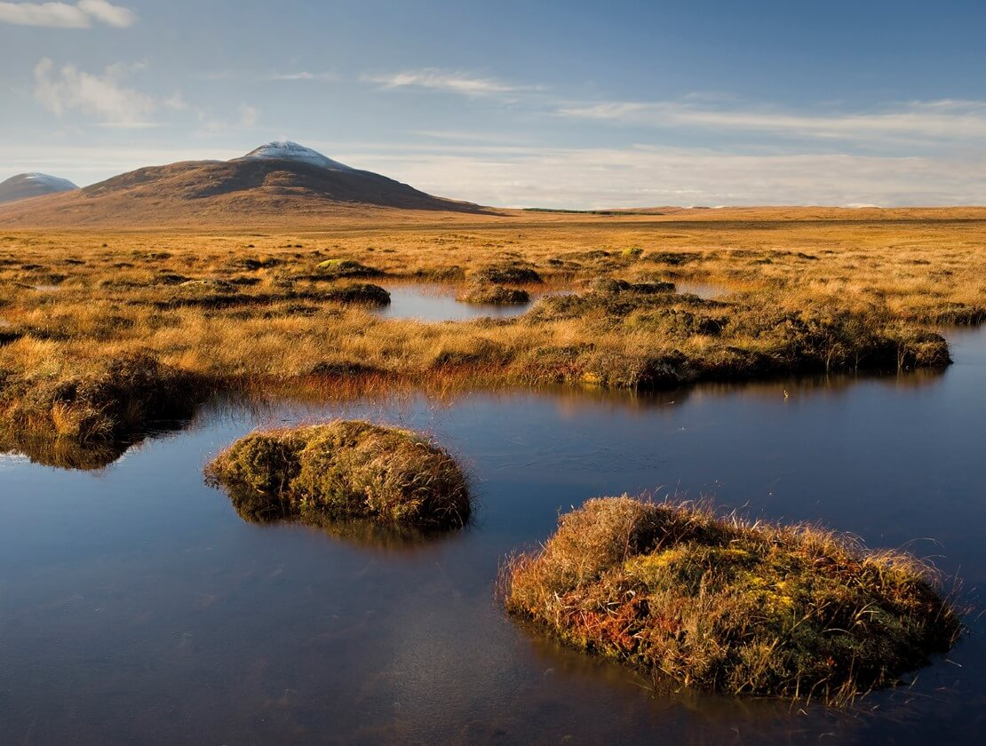 The problem with peat