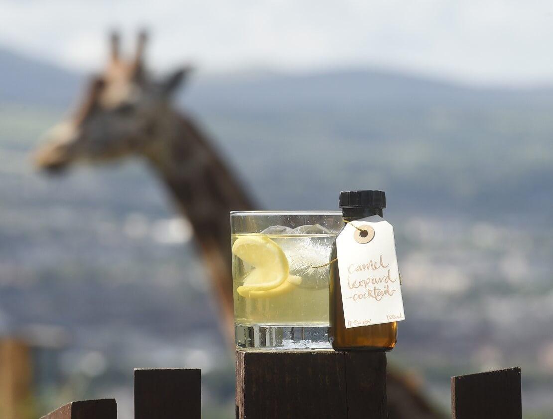Glenmorangie raises a glass to aid giraffe conservation
