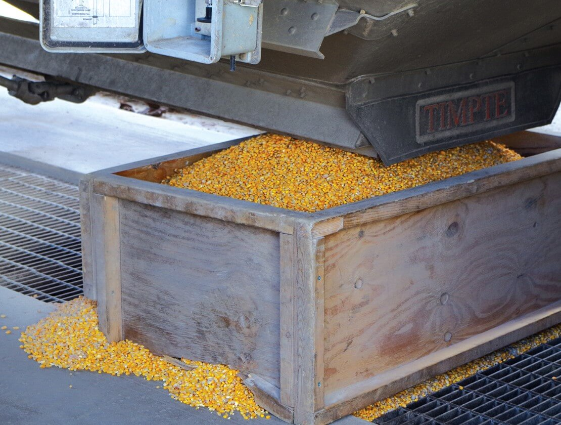 Yellow Dent corn, the essential ingredient