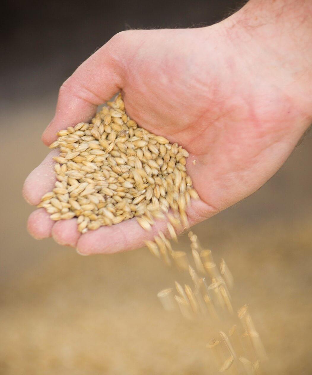 The essential ingredient: barley
